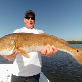 a fisherman holding a stud redfish caught in the Crystal River inshore.
