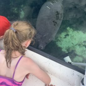 a picture of a manatee