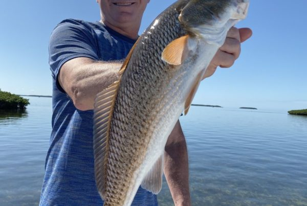 """For the past month the fishing has been spectacular! With hardly any rain and light winds, sight casting to tailing redfish and hiding trout has been tops on the menu. Their have been huge schools of tailing redfish from Homosassa point all the way to the North SHore of Crystal River. My clients and I have been stalking these fish in 6"""" to a foot and a half of water. They have readily taken anything throw at them. My favorite baits other that live shrimp and pinfish are a Capt. Mikes gold spoon or a 3"""" Berkley Gulp Shrimp. These fish have also taken a topwater or two but seem to realy like the Gulps."""