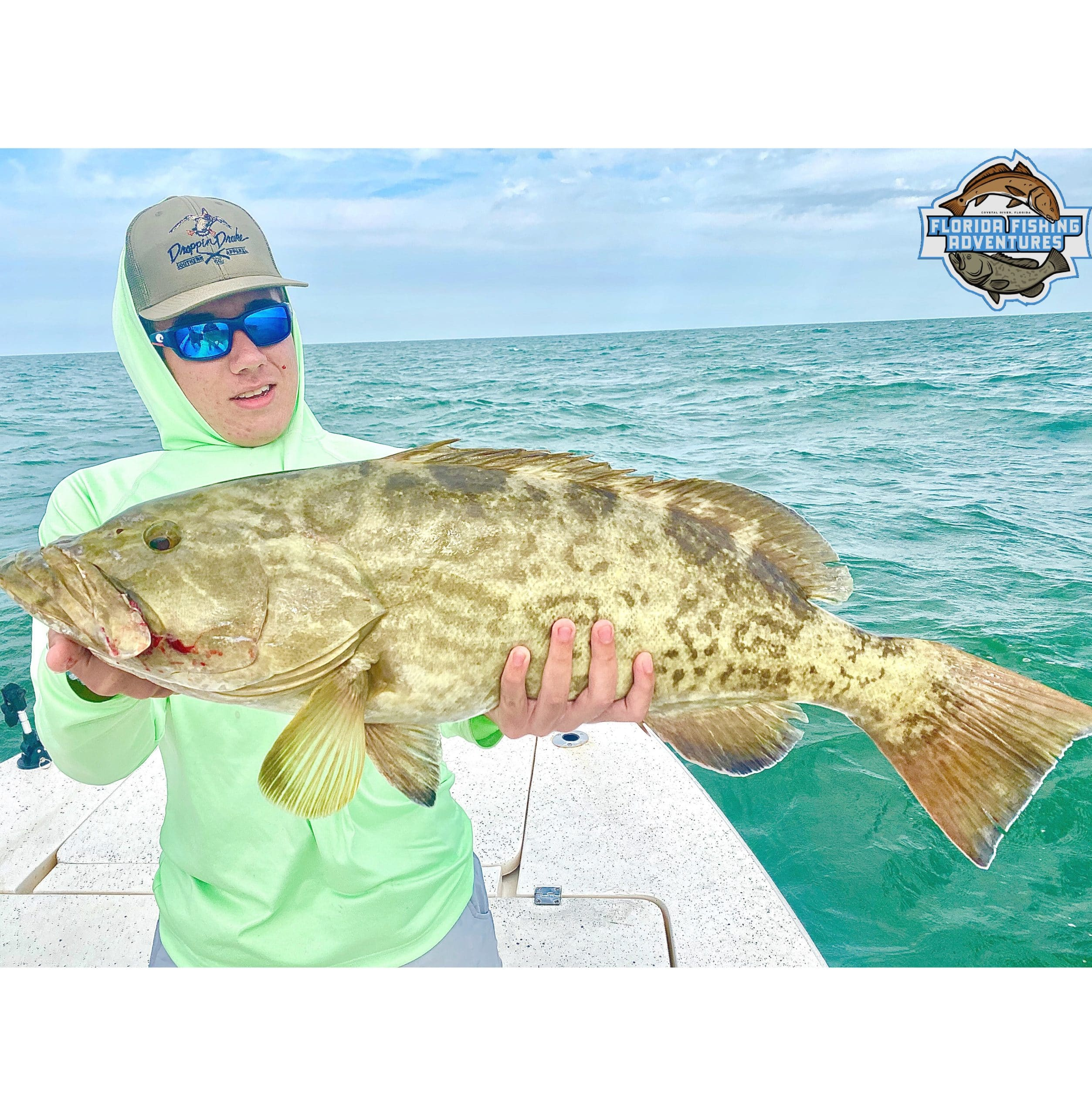 a picture of a grouper
