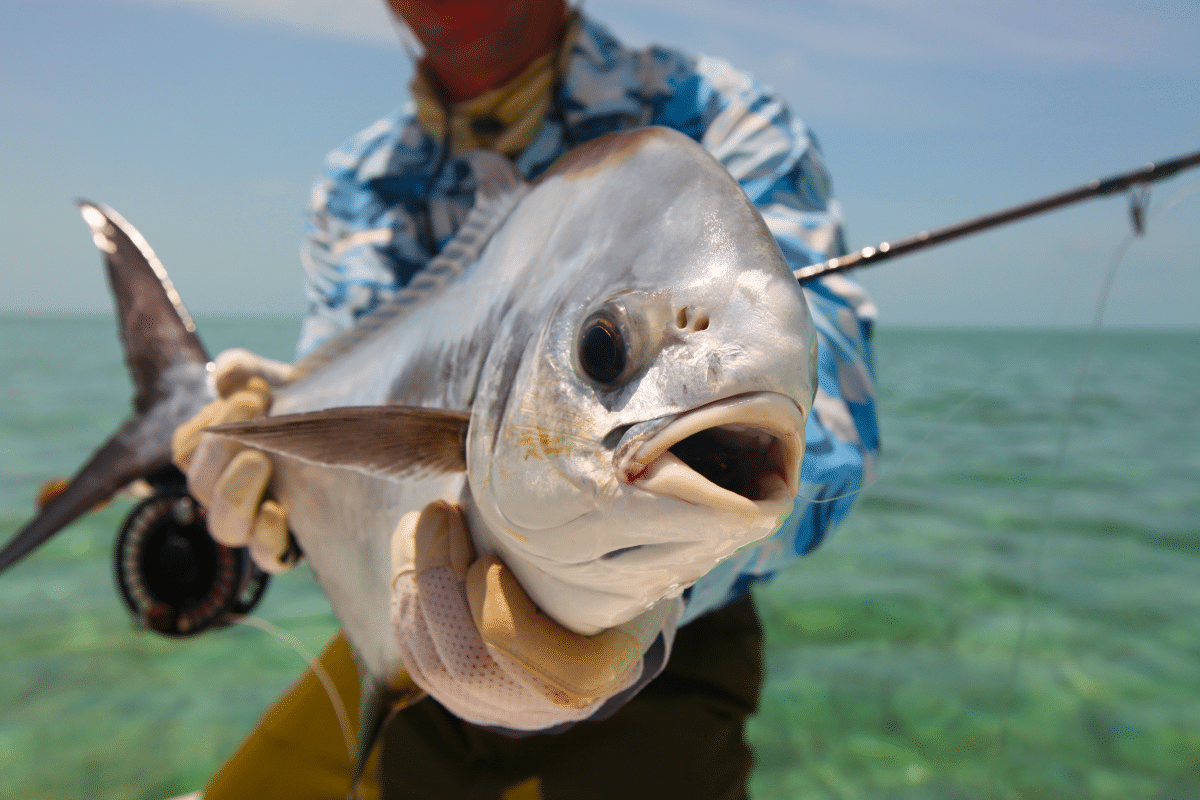 A crystal river fishing charter client with a Permit