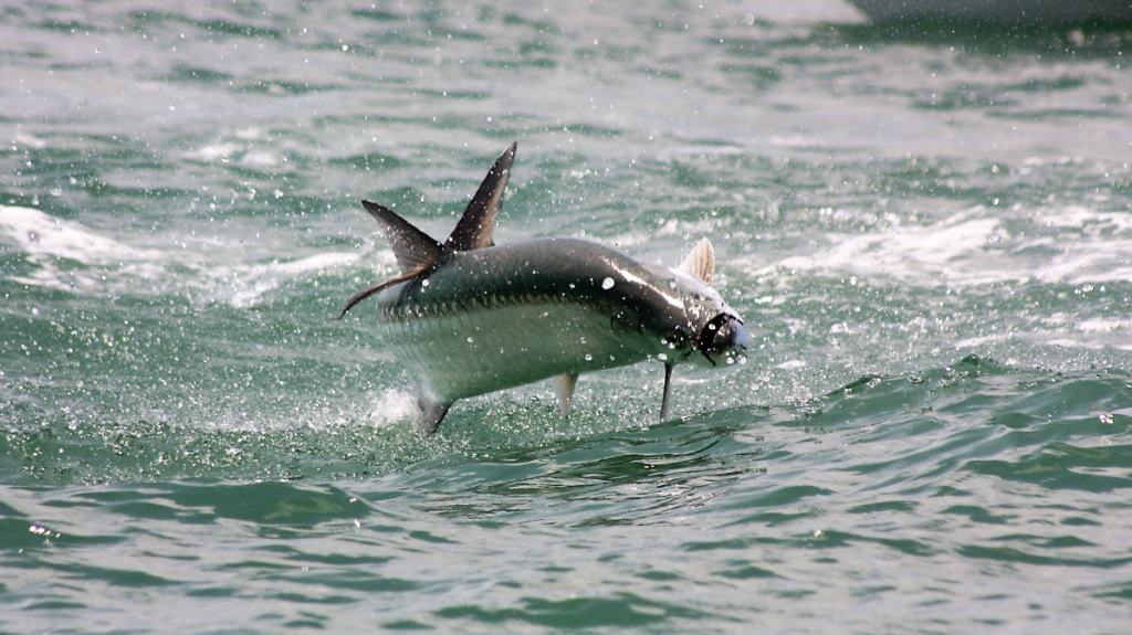 A picture of Crystal River Fishing Charters Fishing Trips In Florida