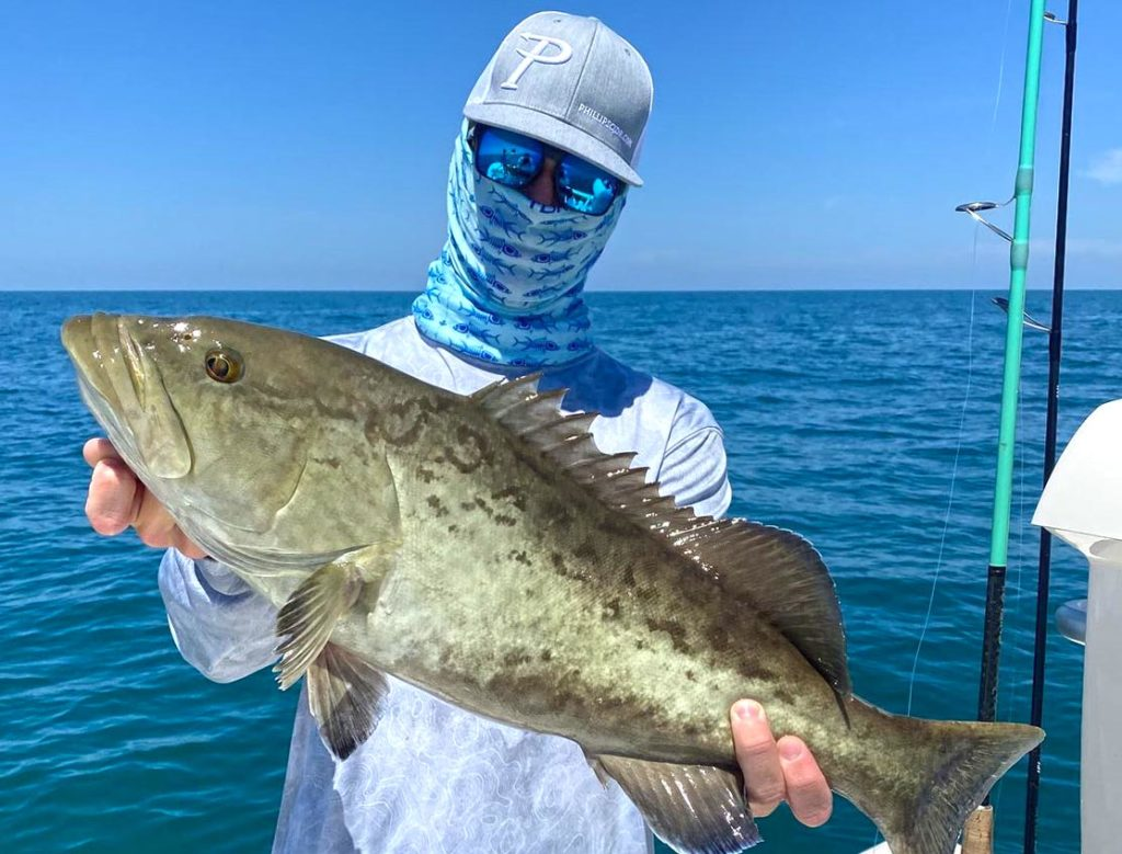 a picture of a grouper caught in Crystal river